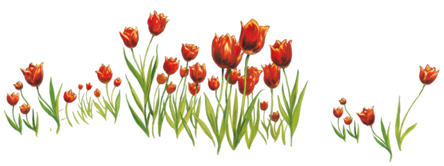 Tulipes.png